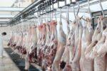 مشاهده بیماری کریمه کنگو در کشتار غیرمجاز / مردم گوشت بهداشتی بخرند